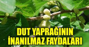 Dut-Yapraginin-Faydalari